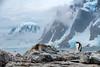 Antarctica splendor