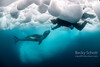 Face to face with a Leopard seal in Antarctica