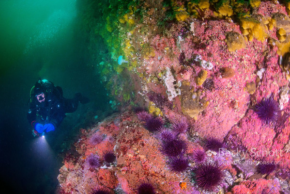 British Columbia Scuba Diving