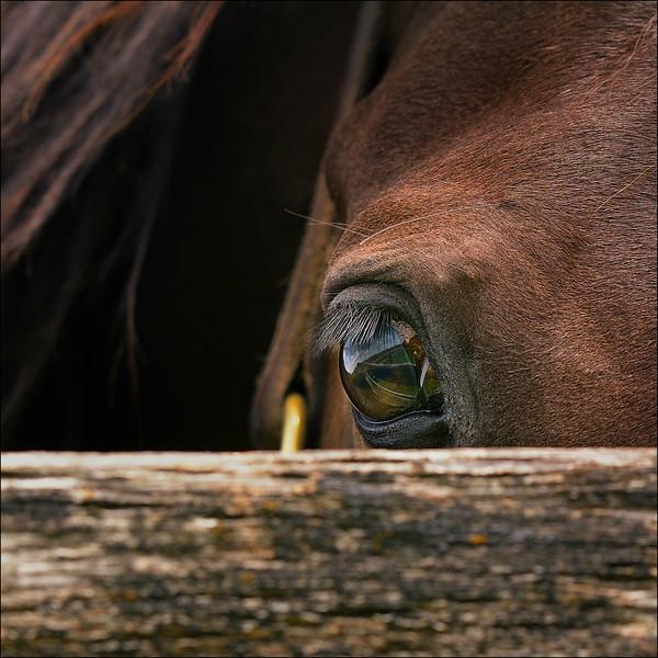 Peekaboo Eye