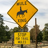 Mule Crossing Sign at the Grand Canyon.