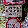 No more than three sheep abreast