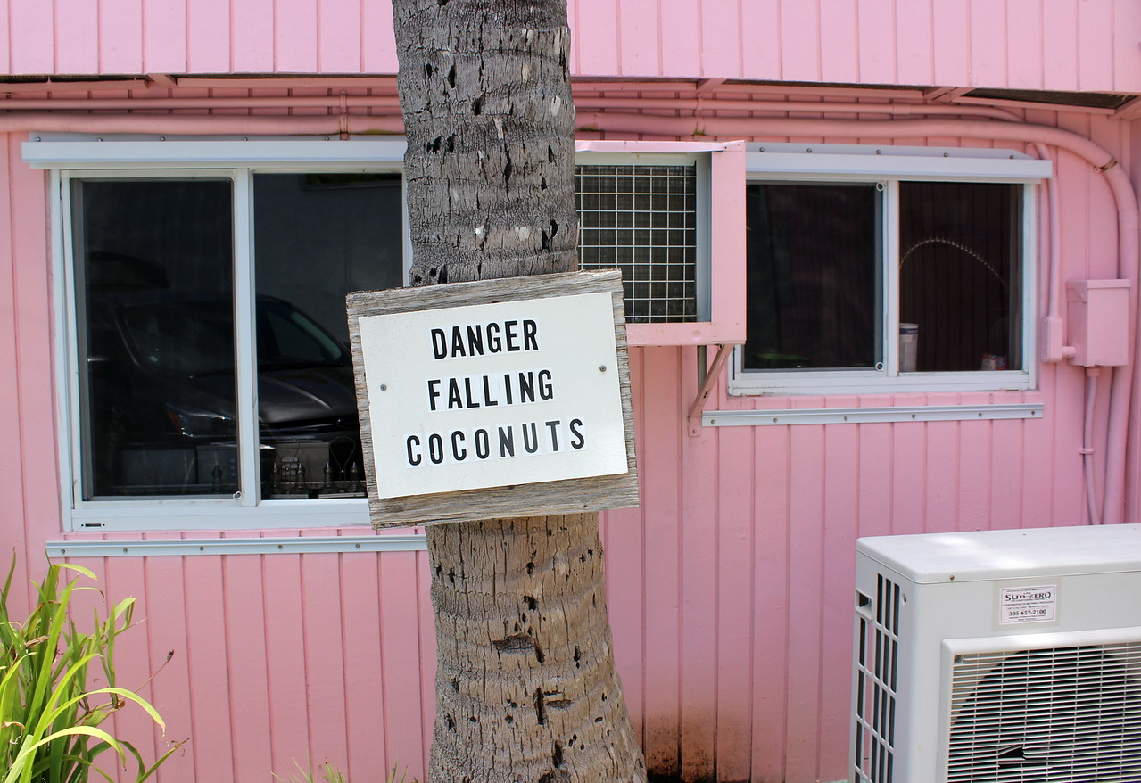 Danger Falling Coconuts
