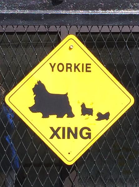 Yorkie Crossing