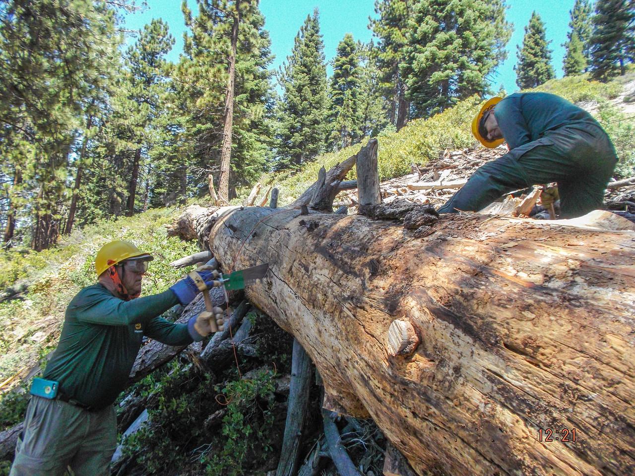 Sawing through large tree, Don C & Cliff H