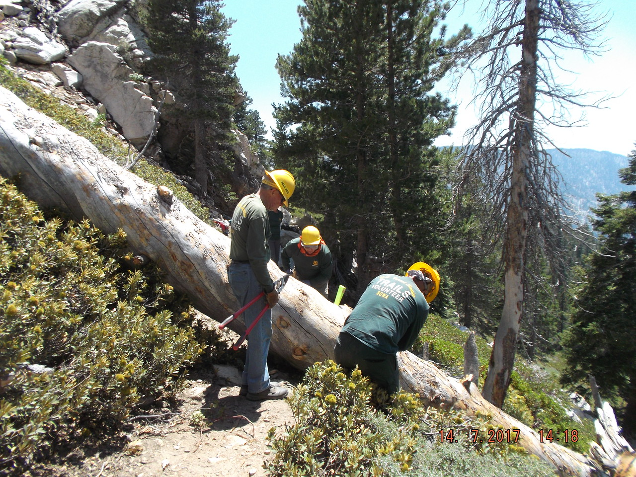 Second Large Tree, Just Below High Creek Camp, San Gorgonio Wilderness