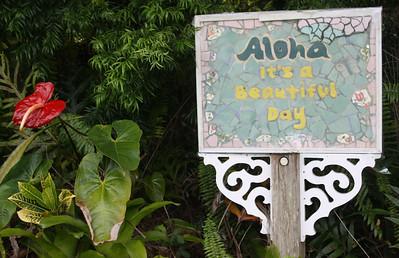 """""""Aloha It's a Beautiful Day"""""""