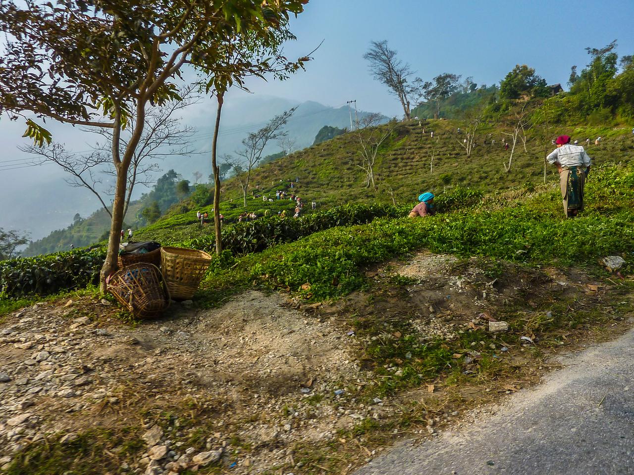 Driving from Darjeeling to Bagdogra, Sikkim