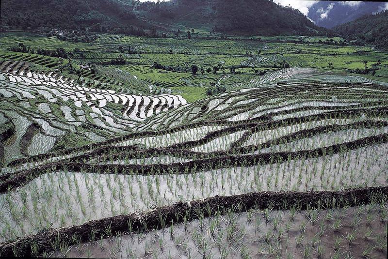 Paddy fields near Martam