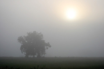 Too Foggy A beautiful delta sunrise or sunset!