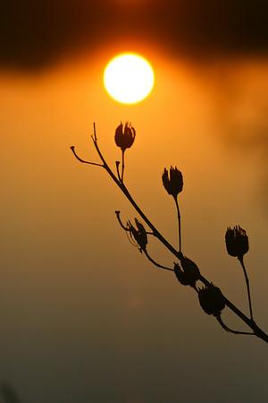 IMG_9889 A beautiful delta sunrise or sunset!