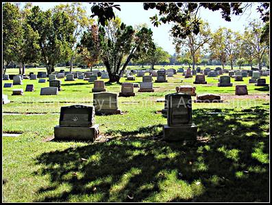 Alta Mesa Memorial Park located in Palo Alto, California