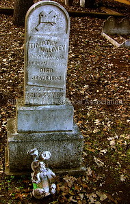 Timothy Maloney died January 16, 1883 aged 44 Years - Holy Cross Cemetery