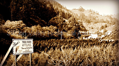 Santa's Tree Farm & Village in Half Moon Bay, California