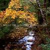 Creek in Sky Londa, California