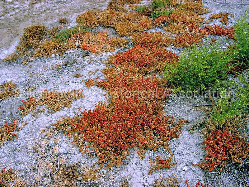 Ground landscape at the Menlo Park salt ponds