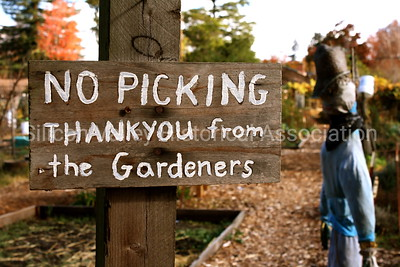 Palo Alto community garden signage: No Picking - Thank You from the Gardeners
