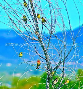 Colorful Finches in a Whimsical Tree at the Palo Alto Baylands
