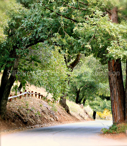 Peaceful road through the Foothills Park in Palo Alto, California