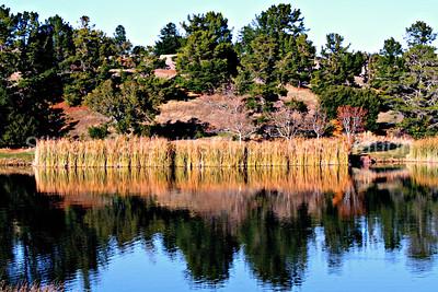 Tranquil Boronda Lake at the Palo Alto Foothills Park