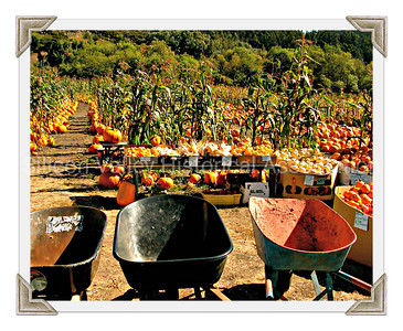 Half Moon Bay pumpkin patch with pumpkins and squash for sale