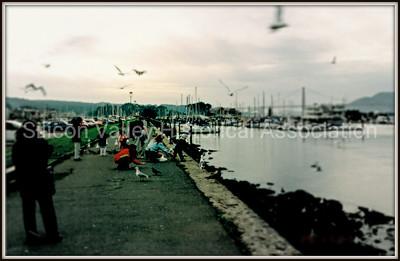 Feeding the seagulls at the San Francisco Marina in 1996