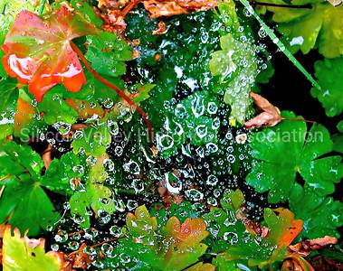 Raindrops on a spider's web in Palo Alto, California