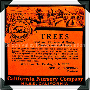 California Nursery Company Niles California Advertisement c. 1915