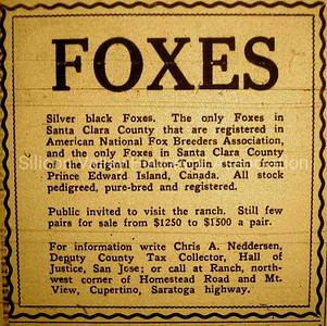 Advertisement in a 1929 Palo Alto newspaper: Silver Black FOXES for Sale
