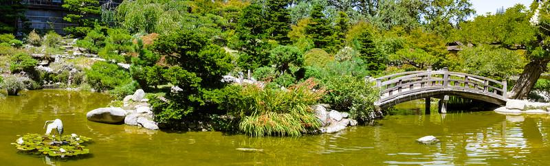 Japanese Koi Pond in Japanese Garden in Saratoga