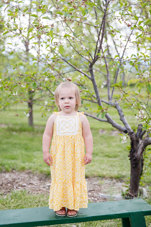 Apple Orchard-4