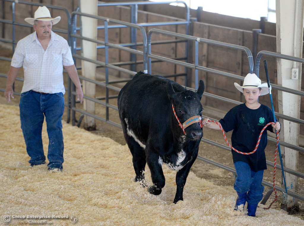 . Granpa Dennis Helberg of Corning shares a few showing pointers with his grandson 10-year-old Orion Helberg as he gets his steer ready to show at the Silver Dollar Fairgrounds in Chico, Calif. Tues. May 22, 2018.  (Bill Husa -- Photos)