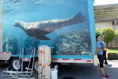 A Sea Lion show will be part of the fun this year as things get underway at the Silver Dollar Fairgrounds in Chico, Calif. Tues. May 22, 2018.  (Bill Husa -- Photos)