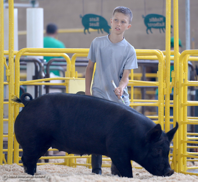 ". 11-year-old Drew Ford of Oroville gets a little practice walking his hog ""Scarlet O\'Hammy\"" around the ring as things get underway at the Silver Dollar Fairgrounds in Chico, Calif. Tues. May 22, 2018.  (Bill Husa -- Photos)"