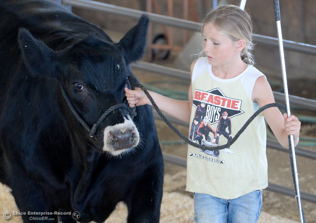 . 11-year-old Haylie Jewett of Chico wears her Beastie Boys shirt as she walks a steer as things get underway at the Silver Dollar Fairgrounds in Chico, Calif. Tues. May 22, 2018.  (Bill Husa -- Photos)