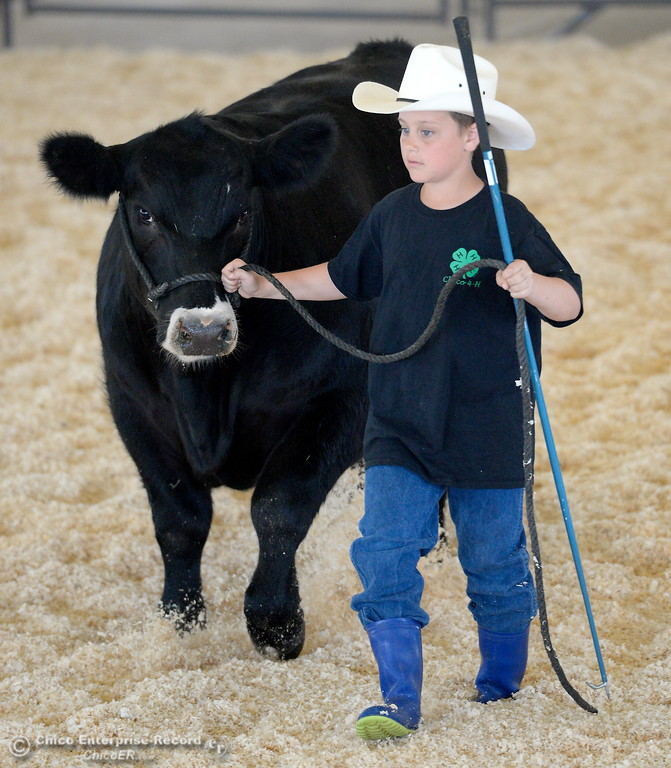 . 10-year-old Orion Helberg walks his steer that he calls Octomus Prime as things get underway at the Silver Dollar Fairgrounds in Chico, Calif. Tues. May 22, 2018.  (Bill Husa -- Photos)