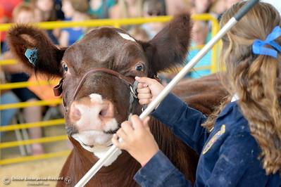 Jillian Gabski auctions off her Grand Champion market steer at the Silver Dollar Fair in Chico, Calif. Saturday May 28, 2016.  (Bill Husa -- Enterprise-Record)