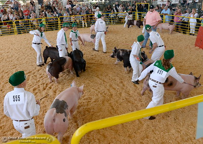 4-H market hogs are shown and judged as things get underway at the Silver Dollar Fairgrounds in Chico, Calif. Wednesday May 25, 2016. (Bill Husa -- Enterprise-Record)