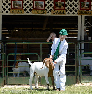 """10-year-old Tyler Zimmerman of Paradise walks his goat """"Charlie"""" as things get underway at the Silver Dollar Fairgrounds in Chico, Calif. Wednesday May 25, 2016. (Bill Husa -- Enterprise-Record)"""