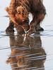 Brown_Bears_Clamming_Alaska (29)