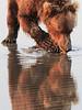 Brown_Bears_Clamming_Alaska (66)