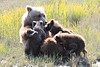 Brown_Bear_Mother_Alaska (44)