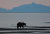 Bears_Dawn_Alaska (1)