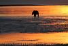 Bears_Dawn_Alaska (12)