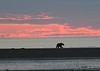 Bears_Dawn_Alaska (6)