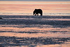 Bears_Dawn_Alaska (14)