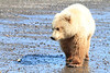 Brown_Bear_Tweens_Alaska (31)