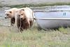Brown_Bear_Tweens_Alaska (29)