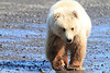 Brown_Bear_Tweens_Alaska (28)