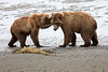 Bear_Beach_Fighting_Silver_Salmon__0027